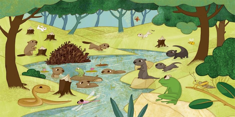 olivier huette éditions Auzou forêt en été